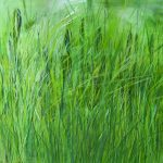 "Claudia Thieme | ""Small Meadow Piece"" 2017"